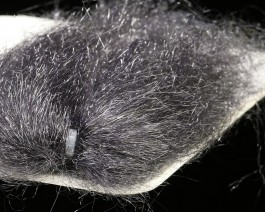 Ghost Hair, Anthracit